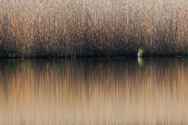 Wasserspiegelung - der grüne Punkt