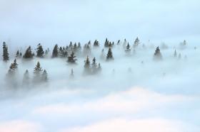 Bergwald im Nebel